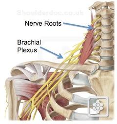 release neck and shoulder tension